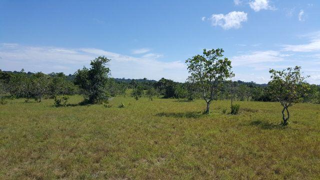 Fazenda de 1500 hectares em Alto Alegre/RR, ler descrição do anuncio - Foto 5