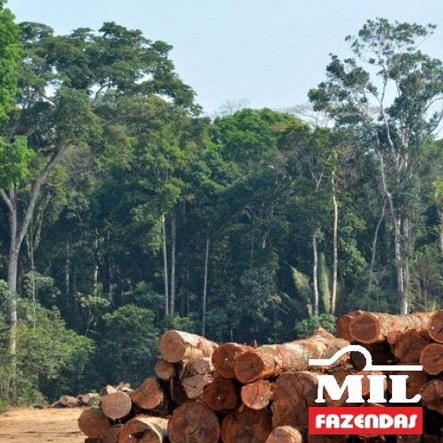 108.000 Há. Humaitá - Amazonas (Mata p/ Exploração) - Foto 5