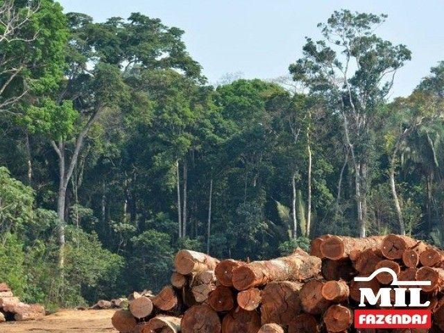 108.000 Há. Humaitá - Amazonas (Mata p/ Exploração) - Foto 7
