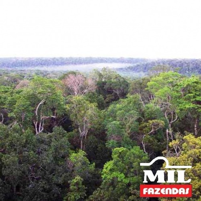 108.000 Há. Humaitá - Amazonas (Mata p/ Exploração) - Foto 6