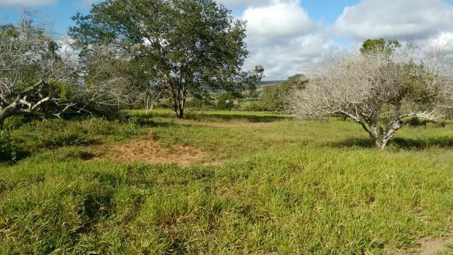 Fazenda em Ribeira do Pombal - Foto 6