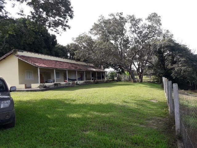 Fazenda 3500Ha - Ribeirão Cascalheira / Agua Boa - Foto 4