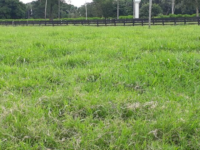 """Confinamento ou Laticínio na comunidade olho d""""agua na BR 364 a 30 km de Cuiabá - Foto 15"""