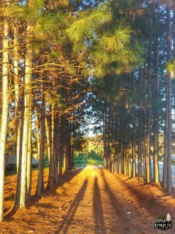 Granja para eventos e hospedagem em Juiz de Fora - Espaço Pinus - Foto 10