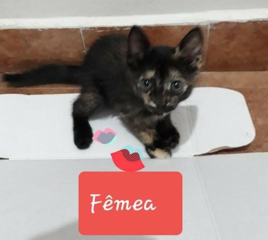 Adotem belos gatinhos! - Foto 4