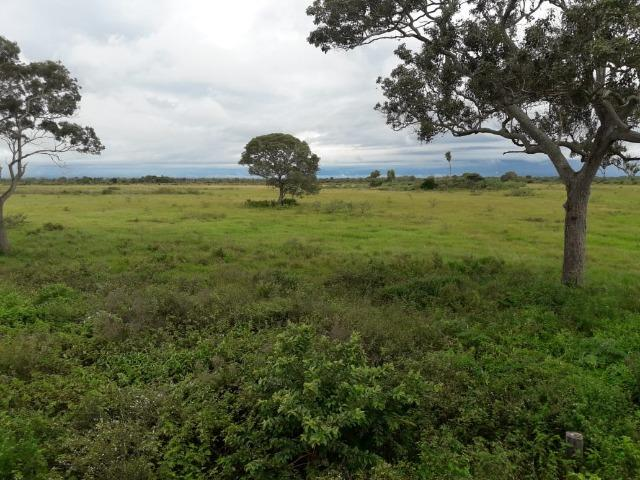 Fazenda na regiao de corumba, para arrendamento - Foto 13