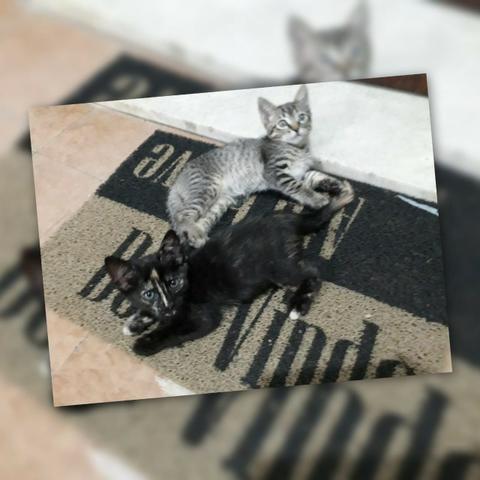 Adotem belos gatinhos! - Foto 5