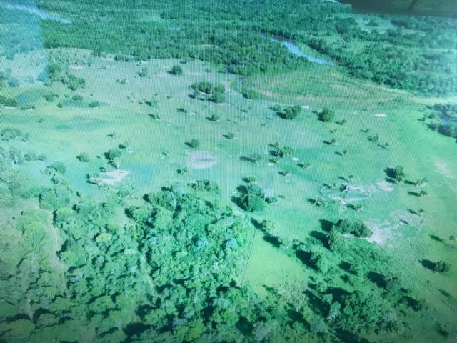 Fazenda na nhecolandia - Foto 5