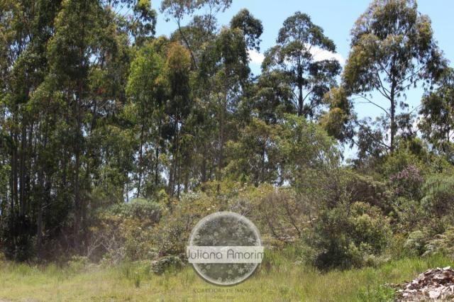Seu sitio em Bom Retiro na Serra Catarinense - Foto 20