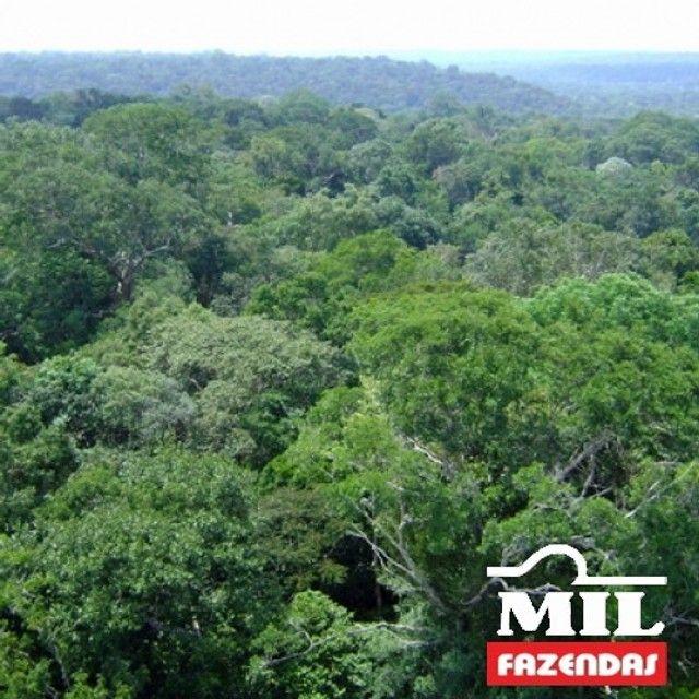 108.000 Há. Humaitá - Amazonas (Mata p/ Exploração) - Foto 4