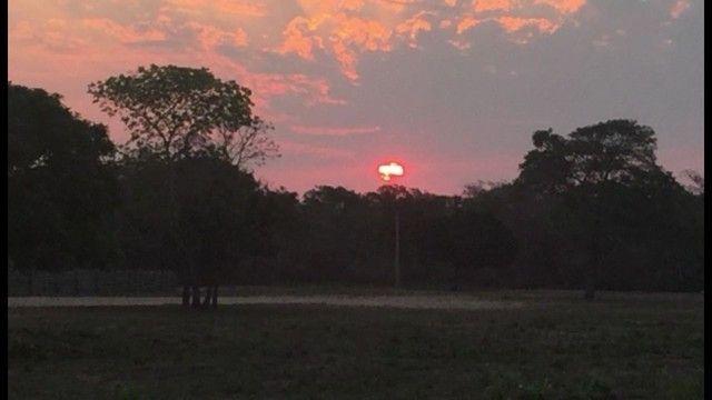 Fazenda em Pantanal Nhecolandia - Leilão Novo Horizonte - MS - Foto 9