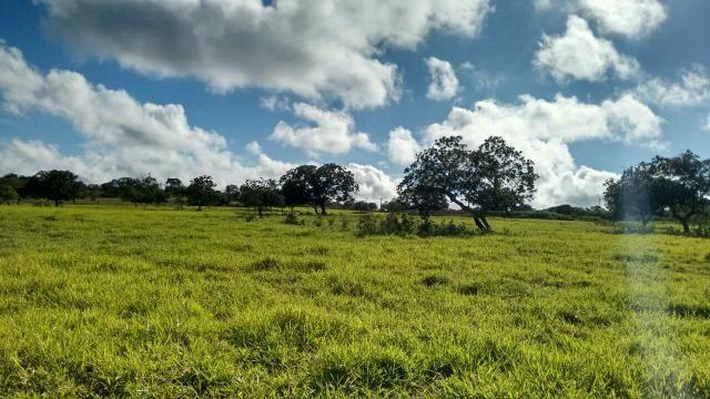 Fazenda em Ribeira do Pombal - Foto 10