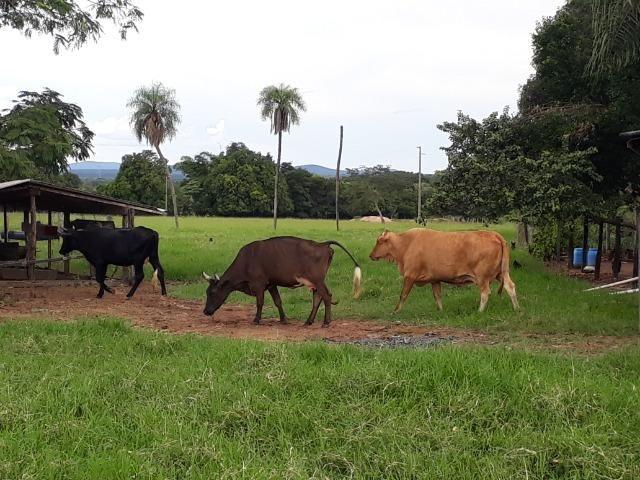"""Confinamento ou Laticínio na comunidade olho d""""agua na BR 364 a 30 km de Cuiabá - Foto 9"""