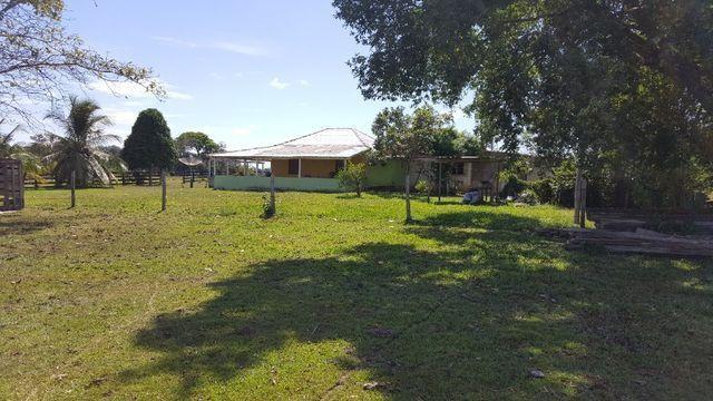 Fazenda de 1500 hectares em Alto Alegre/RR, ler descrição do anuncio - Foto 14