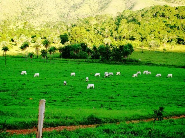 285 Alqs Pra Cria Ótima Logística Terra e Água Pindorama TO - Foto 2