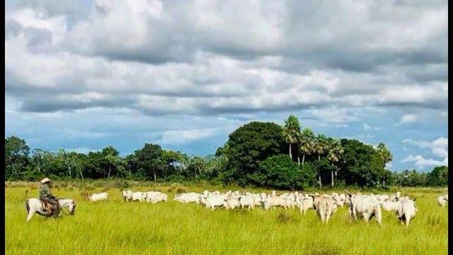 Fazenda em Pantanal Nhecolandia - Leilão Novo Horizonte - MS - Foto 5
