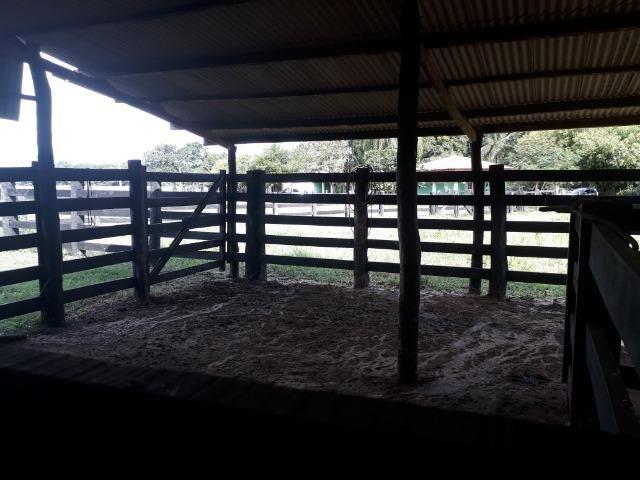 """Confinamento ou Laticínio na comunidade olho d""""agua na BR 364 a 30 km de Cuiabá - Foto 4"""