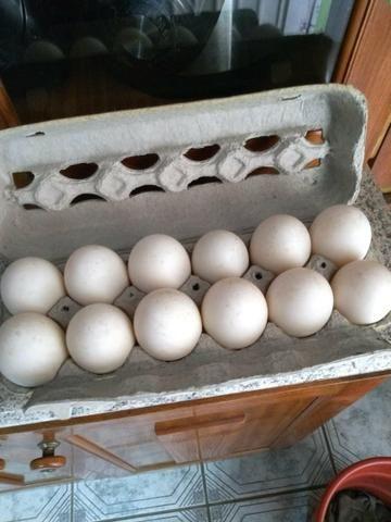 Ovos galados de marrecos