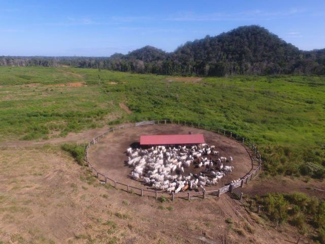 fazenda linda em roraima gado e ou lavoura