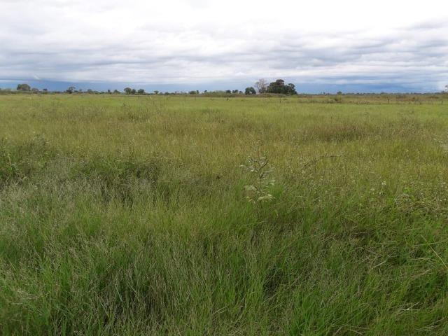 Fazenda na regiao de corumba, para arrendamento - Foto 12