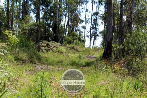 Seu sitio em Bom Retiro na Serra Catarinense - Foto 13
