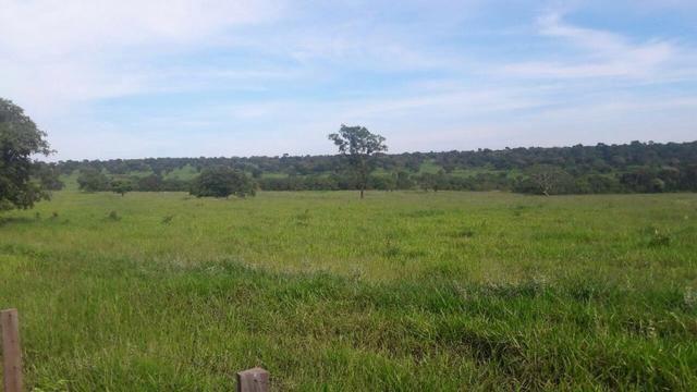 Fazenda na nhecolandia - Foto 7