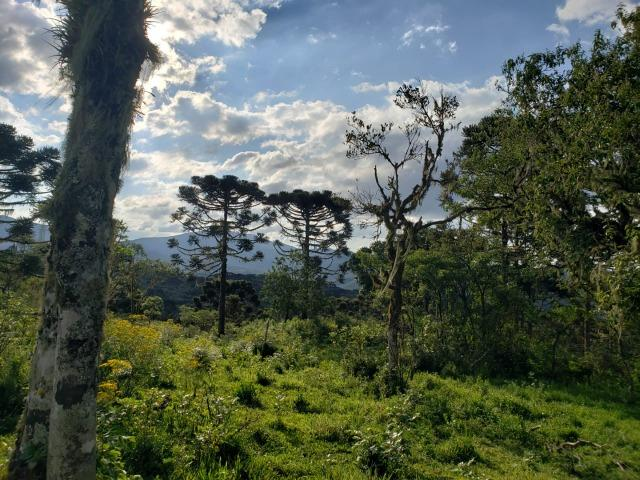 Belíssimo Sítio na Rota Turística de Urupema/Rio Rufino - Foto 10