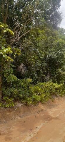 Terreno com pequeno igarapé km 25 - Foto 2