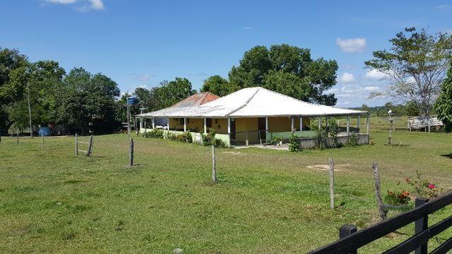 Fazenda de 1500 hectares em Alto Alegre/RR, ler descrição do anuncio - Foto 15