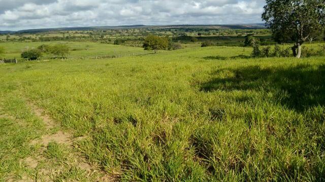 Fazenda em Ribeira do Pombal - Foto 9