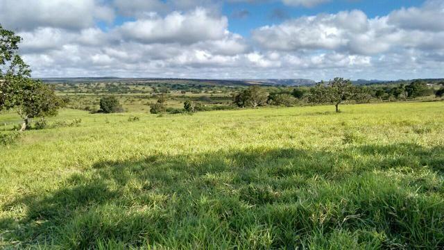 Fazenda em Ribeira do Pombal - Foto 2