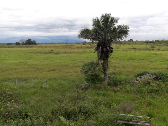 Fazenda na regiao de corumba, para arrendamento - Foto 17