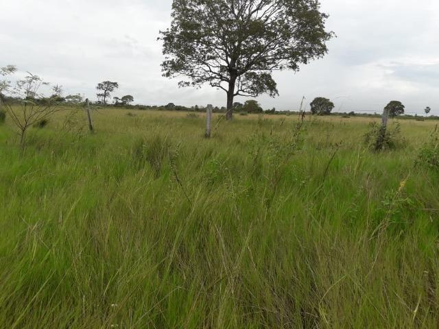 Fazenda na regiao de corumba, para arrendamento - Foto 14