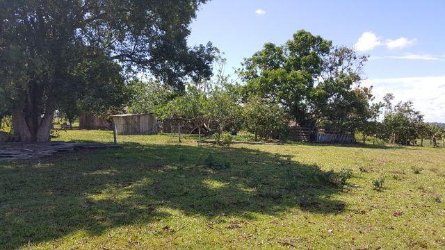 Fazenda de 1500 hectares em Alto Alegre/RR, ler descrição do anuncio - Foto 16