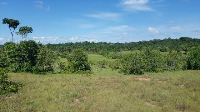 Fazenda de 1500 hectares em Alto Alegre/RR, ler descrição do anuncio - Foto 6