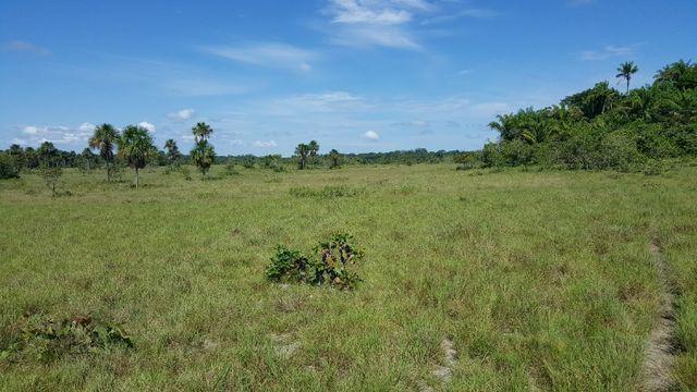 Fazenda de 1500 hectares em Alto Alegre/RR, ler descrição do anuncio - Foto 13