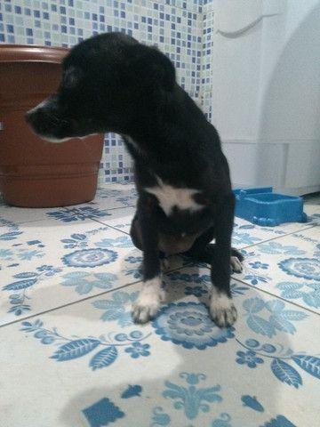 Cachorro srd Grátis - Foto 4