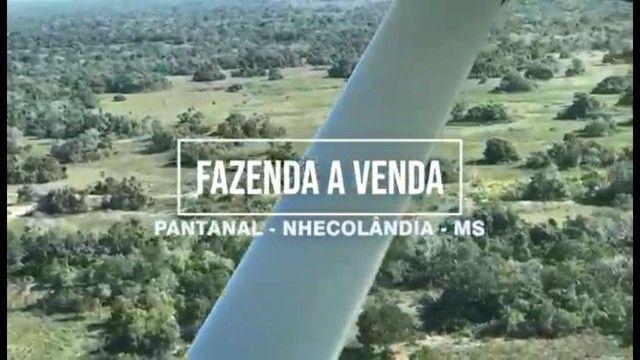 Fazenda em Pantanal Nhecolandia - Leilão Novo Horizonte - MS - Foto 7