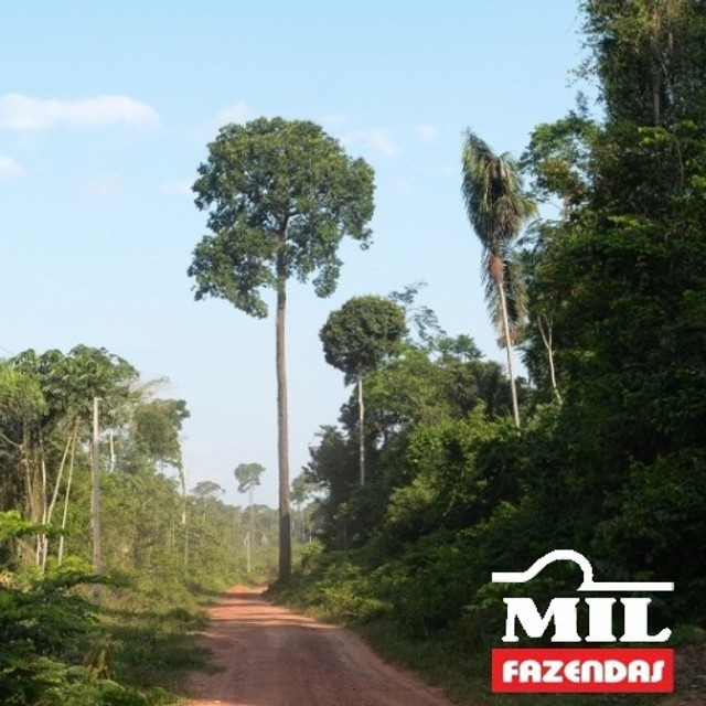 108.000 Há. Humaitá - Amazonas (Mata p/ Exploração) - Foto 3