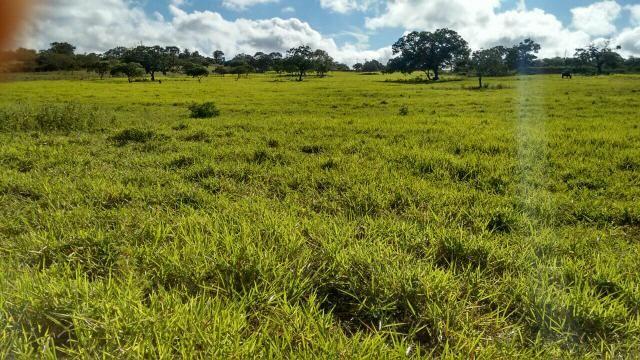 Fazenda em Ribeira do Pombal