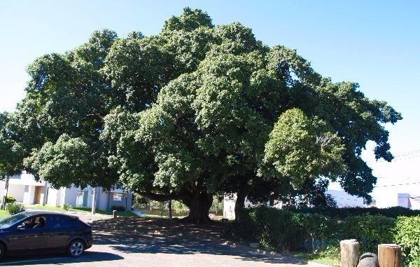 Terreno à venda em Lagos de nova ipanema, Porto alegre cod:MI13440 - Foto 18