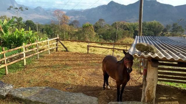 Belíssimo sítio em Pedra Aguda - Bom Jardim - RJ - Foto 16
