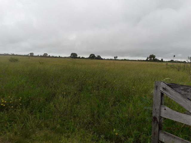 Fazenda na regiao de corumba, para arrendamento - Foto 16