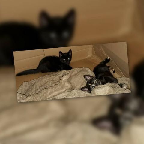 Adotem belos gatinhos! - Foto 6