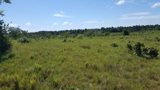 Fazenda de 1500 hectares em Alto Alegre/RR, ler descrição do anuncio - Foto 3