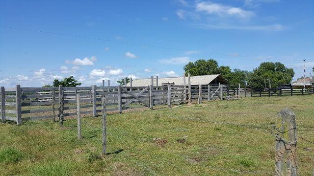 Fazenda de 1500 hectares em Alto Alegre/RR, ler descrição do anuncio - Foto 12