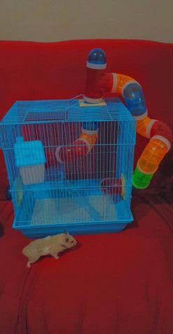 Vende-se gaiolas para hamster  - Foto 6