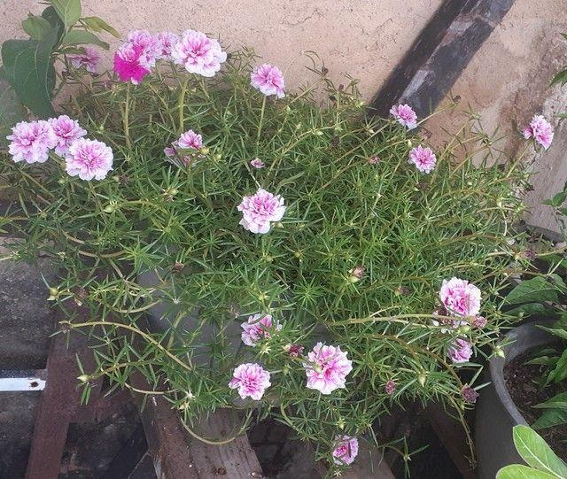 Vamos Renova Os Vaso de suas plantinhas    - Foto 2