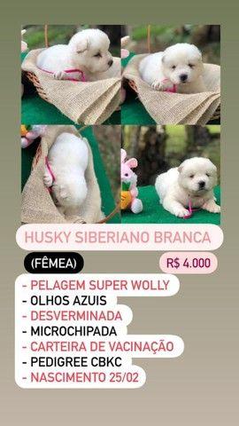 Lindos Filhotes De Husky Siberiano - Foto 6