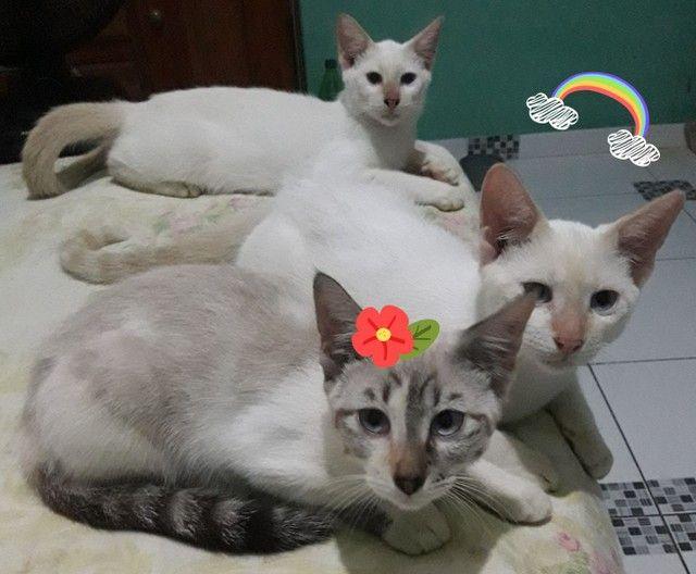 Gatinhos para adoção responsável  - Foto 2